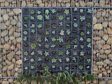 Gabion Vertical Garden